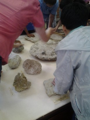 hands on fossils
